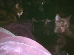 Martin, Luna (grey, mouth open), and Mattie (black, back to us)